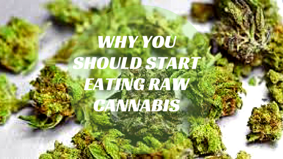 Why you Should Start Eating Raw Cannabis?